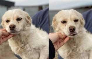 hund-weiblich-rumaenien-maja Acht rumänische Straßenhunde bekommen eine riesige Chance