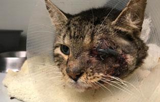 kater-verletztes-auge-bueckeburg-behandelt Verletzter Kater im Tierheim Bückeburg wurde am Auge behandelt