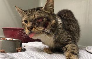 kater-verletztes-auge-bueckeburg Astor - Vergessen und fast verhungert