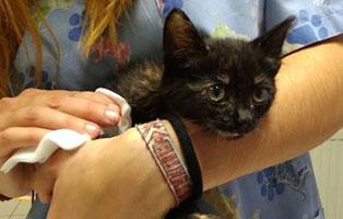 katzenbaby-ivi-ungarn-hilfe Verwahrloste Rosalie hatte Glück im Unglück