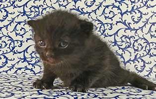katzenbaby-maennllich-04-thueringen Vier Katzenbabys aus Thüringen suchen Start-ins-Leben Paten