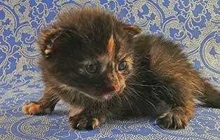 katzenbaby-weiblich-01-thueringen Vier Katzenbabys aus Thüringen suchen Start-ins-Leben Paten