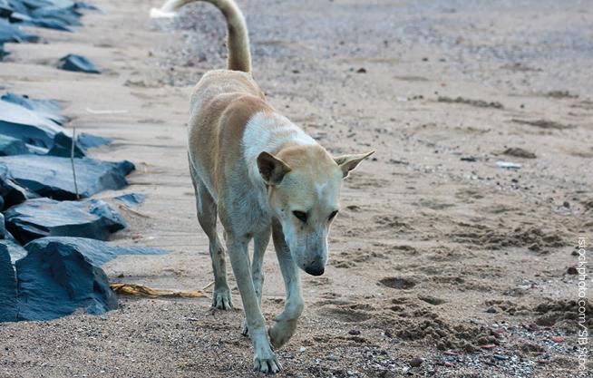 kreta-hund Tierretter auf Kreta verhaftet – TIERSCHUTZLIGA unterstützt