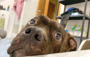 mein-hund-ist-ein-stalker Elliot - alter Tierschutzhund möchte sich verabschieden und bedanken