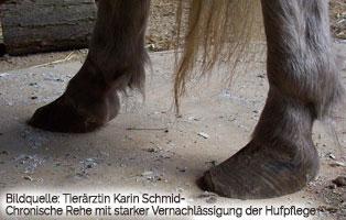 pferde-ratgeber-hufrehe-hufe-neu Hufrehe
