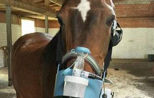 ratgeber-pferd-heustauballergie Tierratgeber - Was Sie über Ihr Tier wissen müssen