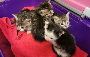 sechs-kitten-unterversorgt-dorf Astor - Vergessen und fast verhungert