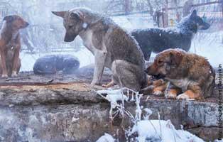 weihnachtsprojekt-frierende-hunde TIERSCHUTZLIGA-Winter-Weihnachts-Projekt - Futter für rumänische Straßentiere