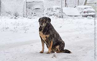 winter-futter-hilfe-ungarn-hund-schnee-verschneit-neu Ehrenamt im Tierheim Bückeburg