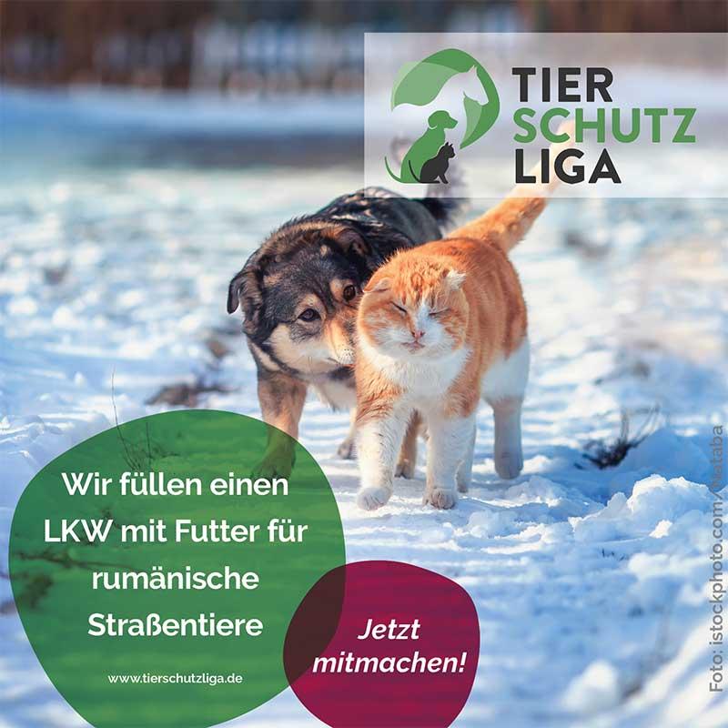 wir-fuellen-einen-LKW-mit-futter TIERSCHUTZLIGA-Winter-Weihnachts-Projekt - Futter für rumänische Straßentiere