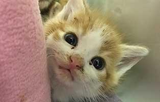 BK205_20-männl Katzenstation Netzschkau sucht gelernte/n Tierpfleger/in