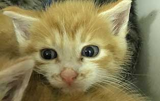 BK206_20-männl Fünf Katzenbabys aus dem Tierheim Bückeburg suchen Start-ins-Leben Paten