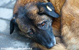 beitrag-rumänien-hund Zwei sehr mitgenommene Hunde aus Polen suchen Aufnahmepaten