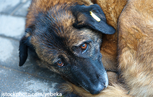 beitrag-rumänien-hund Tierschutzliga-Dorf - Dringend Hilfe benötigt