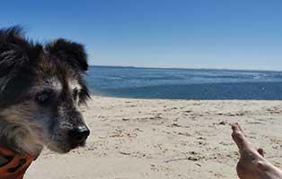 hund-hutch-lebenszeichen-strand Wicky hat es gut getroffen