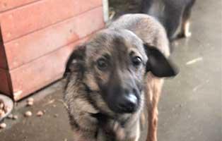 hund01-maennlich-4jahre Fünf Hunde aus einem Polnischen Tierheim suchen Aufnahmepaten