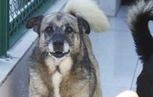 hund02-weiblich-8jahre Fünf Hunde aus einem Polnischen Tierheim suchen Aufnahmepaten