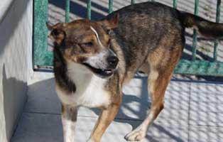 hund03-maennlich-3jahre Fünf Hunde aus einem Polnischen Tierheim suchen Aufnahmepaten