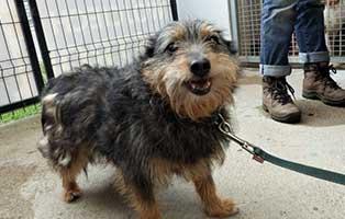 hund04-weiblich-aelter Fünf Hunde aus einem Polnischen Tierheim suchen Aufnahmepaten