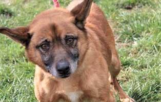 hund05-maennlich-9jahre Fünf Hunde aus einem Polnischen Tierheim suchen Aufnahmepaten