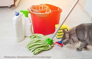 katzen-ratgeber-sicherheit Katzensichere Wohnung