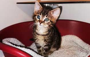katzenbaby-uk094-20-start-ins-leben Fünf Kitten aus dem Tierheim Unterheinsdorf suchen Start-ins-Leben Paten