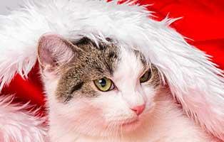 tierheim-weihnachtsspende-katze-muetzel Fünf Hunde aus einem Polnischen Tierheim suchen Aufnahmepaten