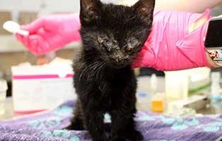 katzenbaby-SK649_20_männlich Katzenfang und Kastrationsaktion