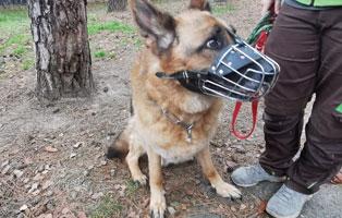 schaeferhund-aaron-verwahrlost-betreuer TIERSCHUTZLIGA Jahreskalender 2021