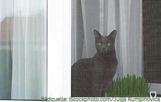 wohnung-katzensicher-katzennetz Labrador in Not Vermittlung