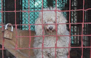 auslands-fonds-beitrag Laufende Tierschutz-Projekte