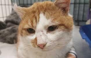 fundkater-thueringen-verletzt-portrait Abgemagerte Katze in schlechtem Zustand braucht Hilfe