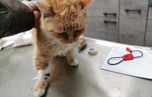 fundkatze-thueringen-blutet-tisch Blutende Fundkatze aus Thüringen braucht Hilfe