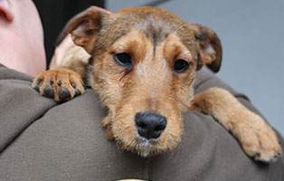 futterpatentier-ilaria Tiervermittlung in unseren Tierheimen