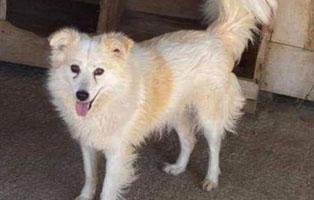 hund-charity-weiblich-6jahre-rumaenien Fünf Hunde aus Rumänien suchen Aufnahmepatenschaften
