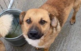hund-laines-maennlich-5jahre-rumaenien Tiervermittlung in unseren Tierheimen