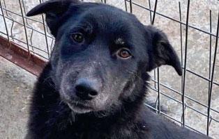 hund-louisa-weiblich-3jahre-rumaenien Fünf Hunde aus Rumänien suchen Aufnahmepatenschaften