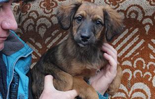 hund-medox-maennlich-4monate-aufnahmepatenschaft Schäferhündin Johanna aus dem Tierheim Békéscsaba braucht eine Op