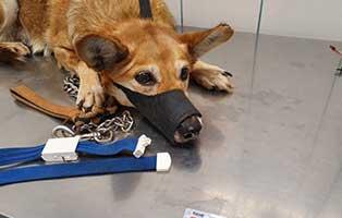 hund-pirike-ungarn-inkontinenz Luna - EKH (HK103/19)