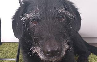 hund-walli-zuhause-gefunden-portrait Fee, Feli und Felia