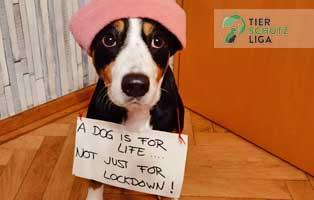just-vor-life-hund01 Vermittlungstier