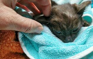katzenbaby-maennlich-sk002-21-start-ins-leben 10 Katzen suchen Start-ins-Leben Paten