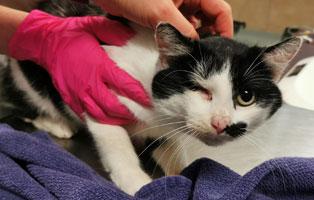 katzenbaby-maennlich-sk007-21-start-ins-leben 10 Katzen suchen Start-ins-Leben Paten