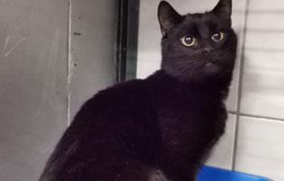 katzenbaby-maennlich-sk010-21-start-ins-leben 10 Katzen suchen Start-ins-Leben Paten