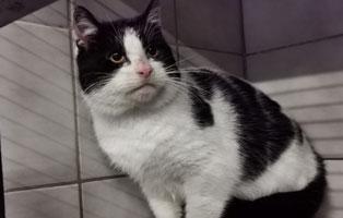 katzenbaby-maennlich-sk011-21-start-ins-leben 10 Katzen suchen Start-ins-Leben Paten