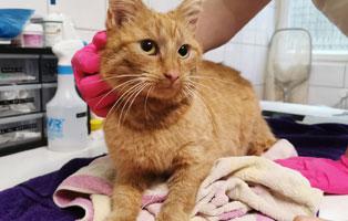 katzenbaby-maennlich-sk013-21-start-ins-leben 10 Katzen suchen Start-ins-Leben Paten