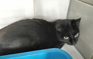 katzenbaby-weiblich-sk003-21-start-ins-leben 10 Katzen suchen Start-ins-Leben Paten