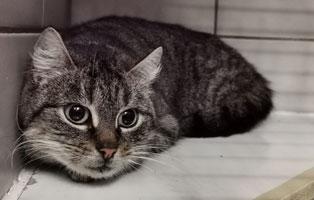 katzenbaby-weiblich-sk004-21-start-ins-leben 10 Katzen suchen Start-ins-Leben Paten