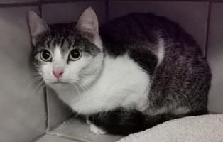 katzenbaby-weiblich-sk005-21-start-ins-leben 10 Katzen suchen Start-ins-Leben Paten
