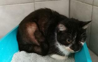 katzenbaby-weiblich-sk006-21-start-ins-leben 10 Katzen suchen Start-ins-Leben Paten